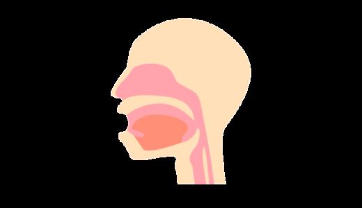 咽頭と喉頭のイラスト