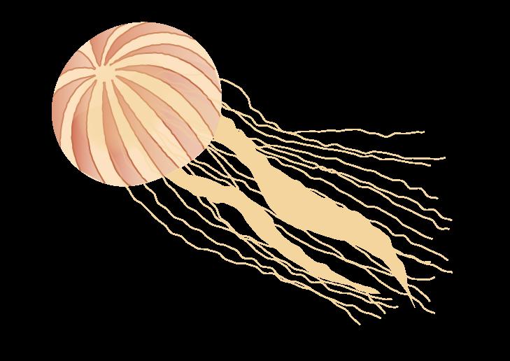 アカクラゲのイラスト