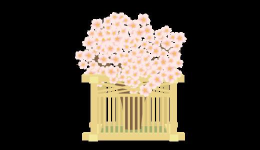 左近の桜のイラスト