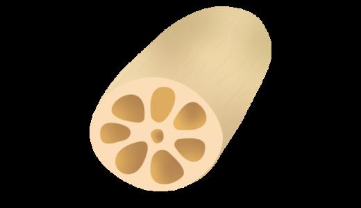 レンコンのイラスト
